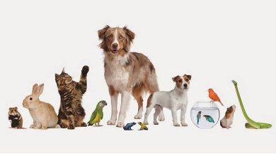 فروش حیوانات خانگی