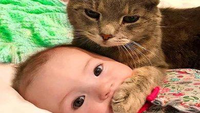 ببینید   مذاکره جالب یک کودک با گربه