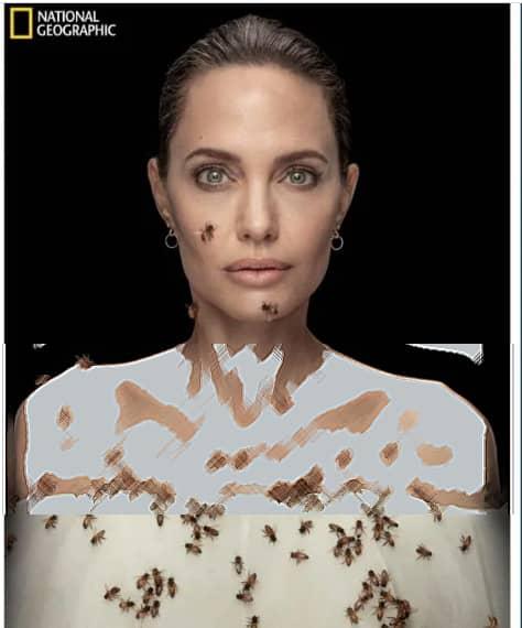 فتوشات های حیرت آور از حمله زنبورها به آنجلیناجولی