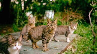 سگ و گربههای خیابانی خوبند یا بد؟