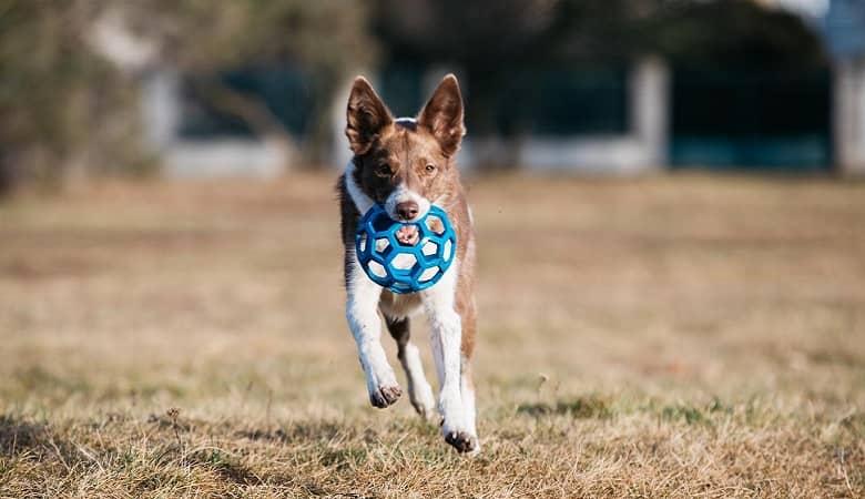 سگ های نابغه که صد اسباب بازی را تشخیص می دهند!